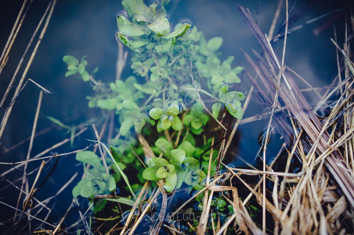 fotografia: Fotografia: Wiosna na roztoczu. (007)