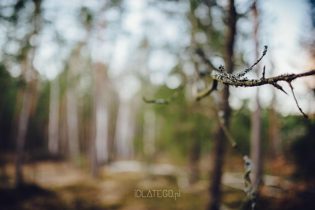 fotografia: Fotografia: Wiosna na roztoczu. (013)