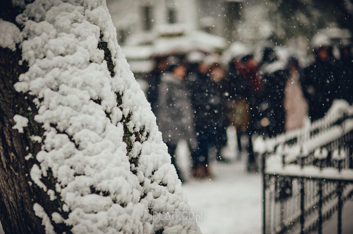fotografia: Zimowy Lwów. (026)