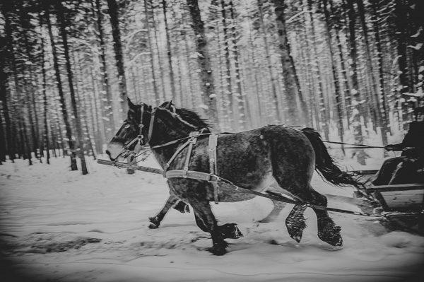 Fotografia Kulig Roztoka